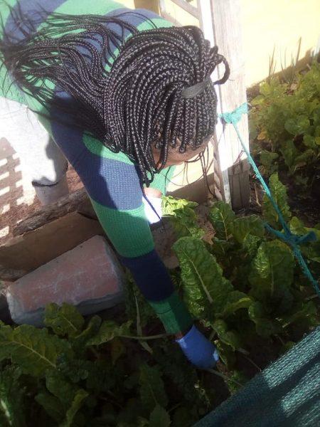 Mams- home & community garden