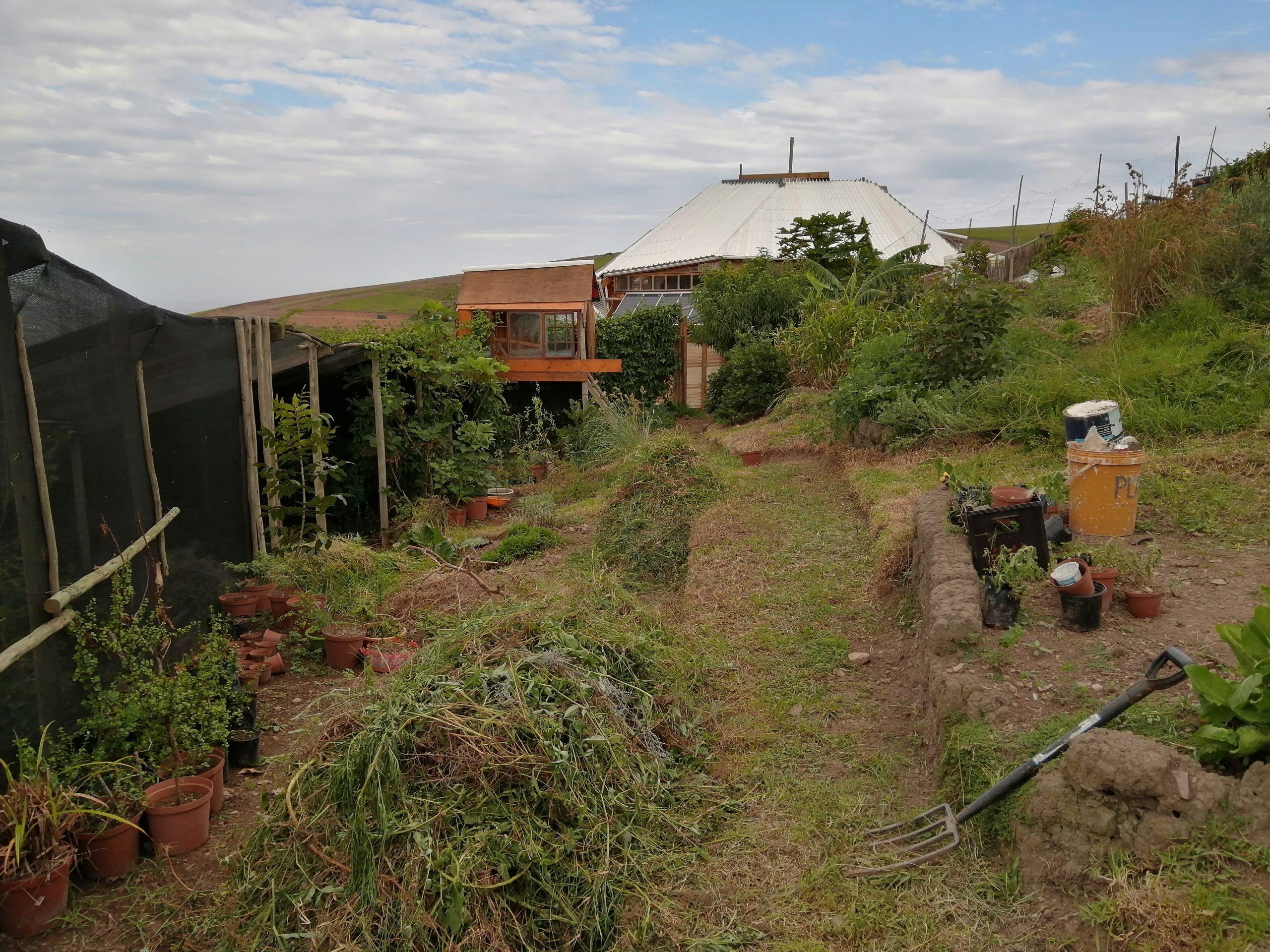 Wild Lubanzi Veggie Garden