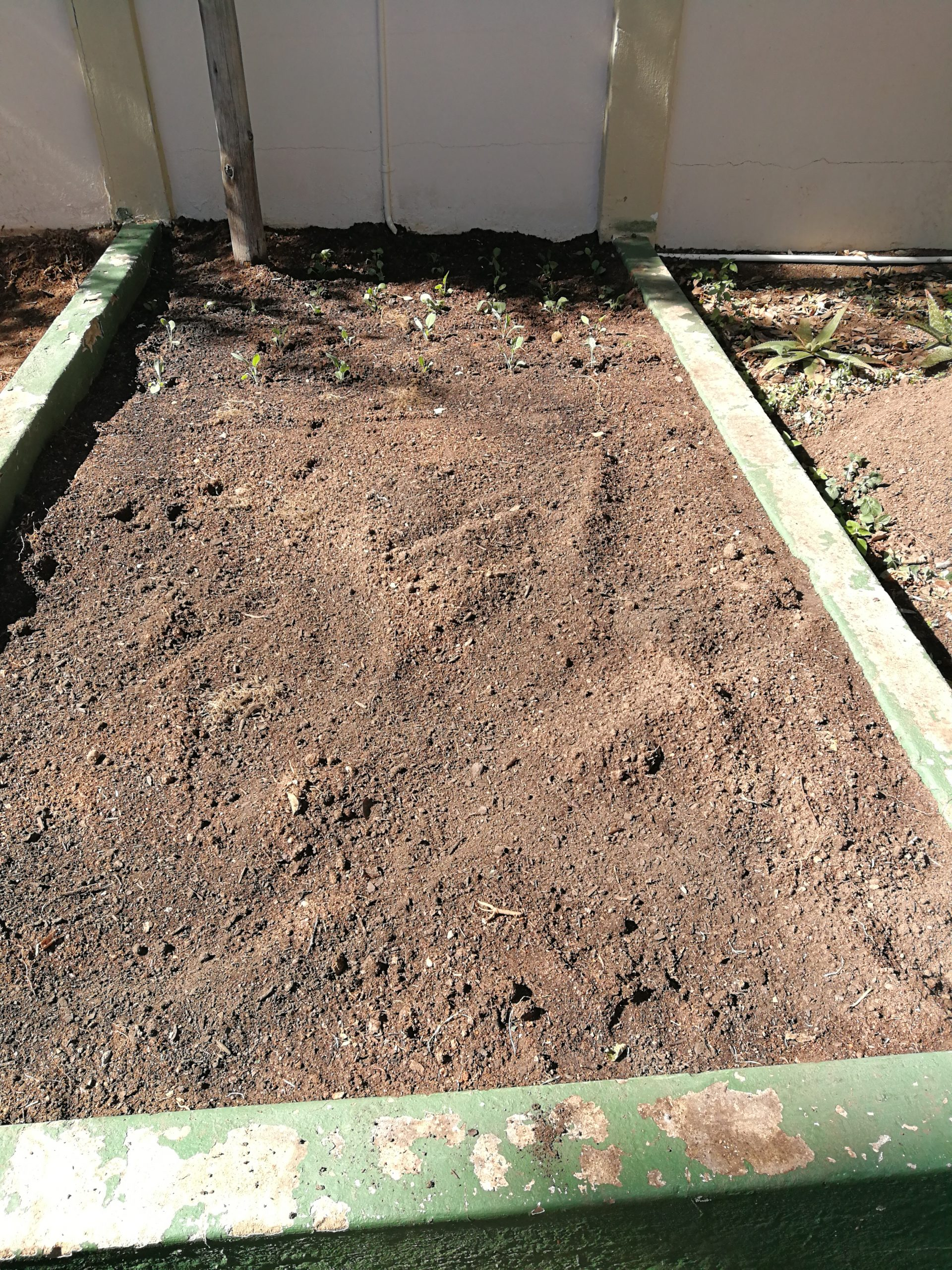 Filled bed with orgnic compost