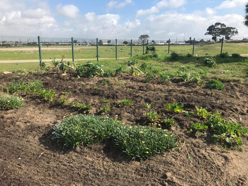 Ezemvelo Organic Garden