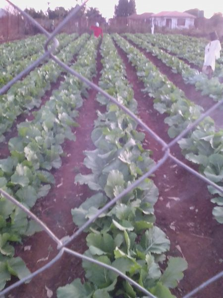Ramovha Farming  (Pty) Ltd